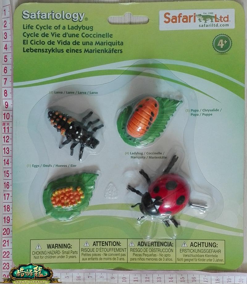 瓢虫属于节肢动物门昆虫纲,会经历虫卵,幼虫,虫蛹和成年瓢虫,这四个